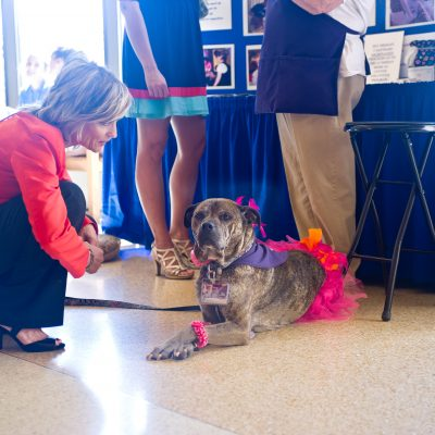 Freida the Therapy Dog - SCL Health